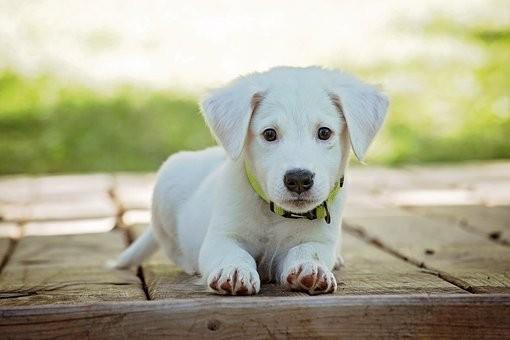puppy-1903313__340